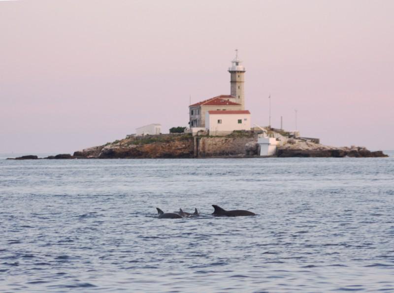 delfini-rovinj